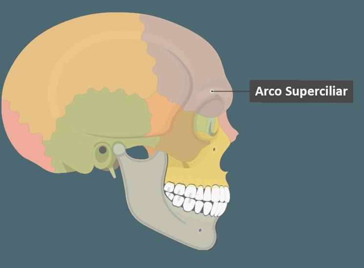 Arco ciliar