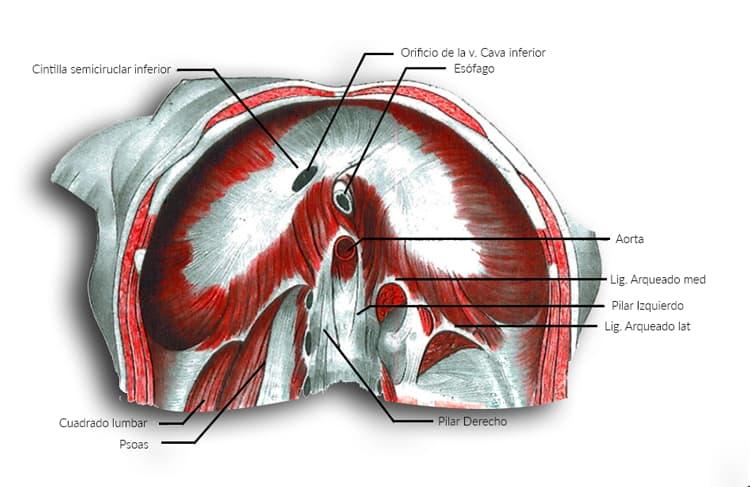 Diafragma orificios