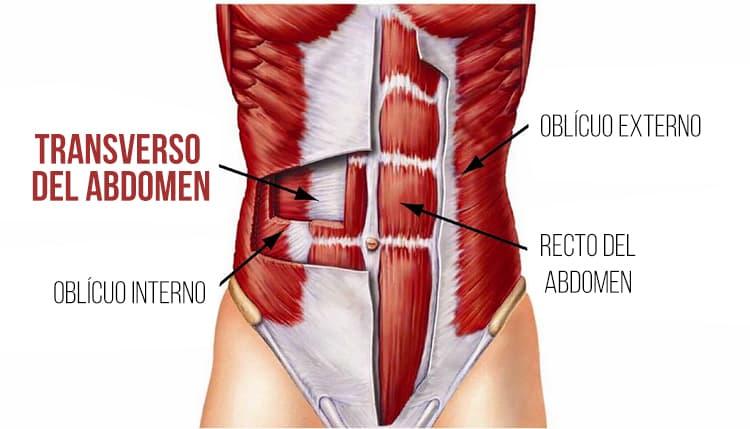 Origen transverso abdominal