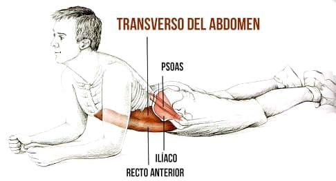 estiramiento del transverso abdomen