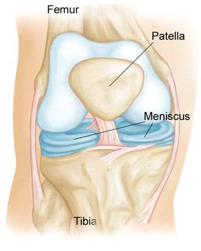 anatomia menisco